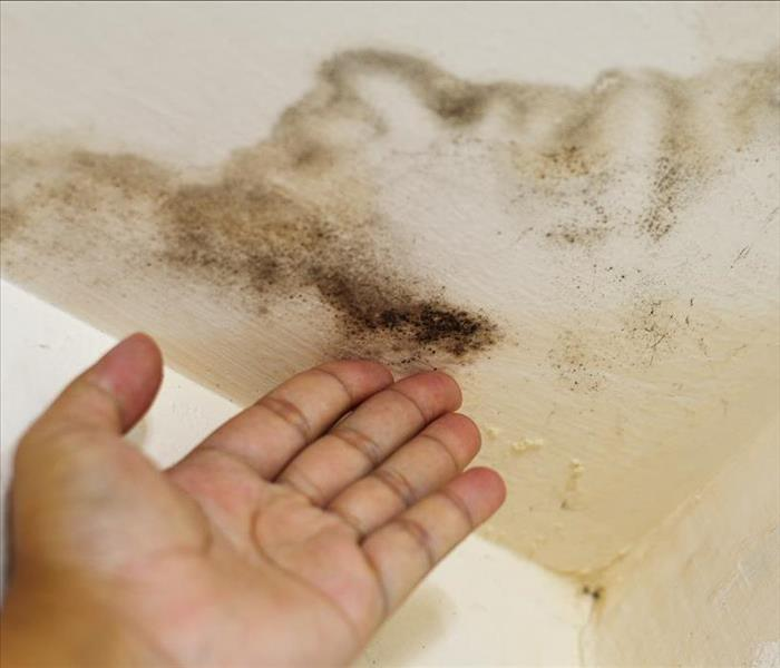 Hand touching ceiling with water damage and mold